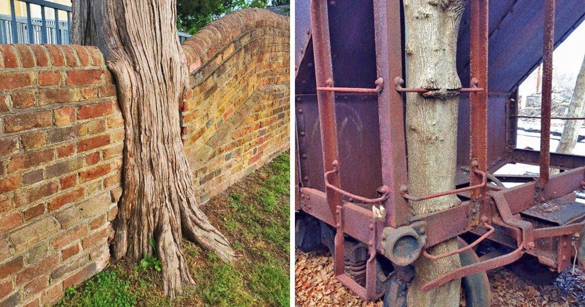 25 Photos d'arbres qui ont l'air carrément affamés