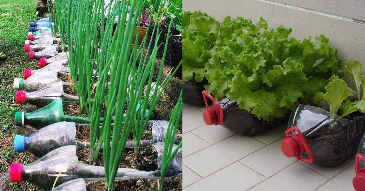Oui, il est possible de cultiver 12 aliments avec de simples bouteilles en plastique