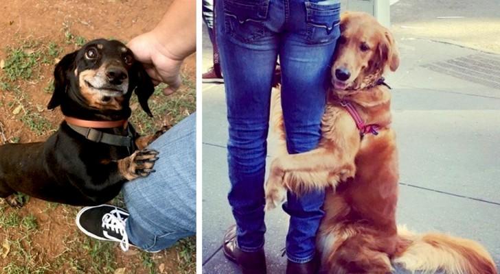 12 chiens domestiques qui ont montré tout leur amour pour leurs maîtres de la manière la plus douce