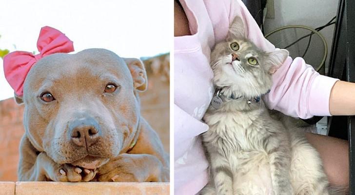 15 fois où des chiens et des chats ont poser leurs regards affectueux et ont ému leurs humains