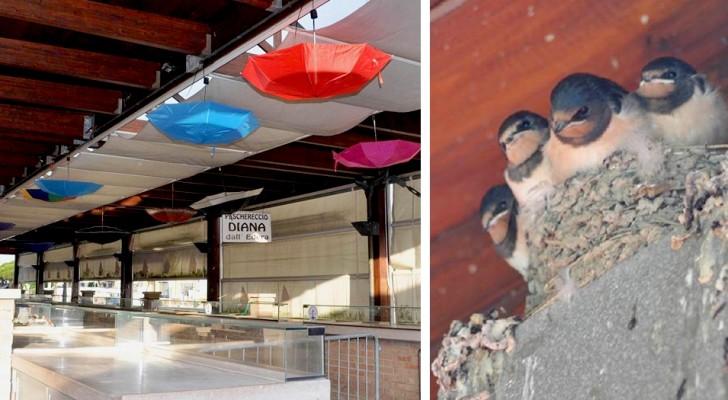 Dans ce marché couvert, les commerçants ont accroché des parapluies colorés pour protéger les nids des hirondelles