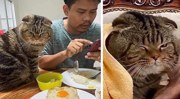 Une femme raconte avec des photos hilarantes comment son chat a réussi à 'voler' son mari