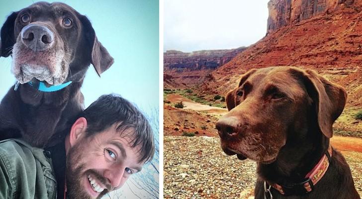 Il découvre que sa chienne bien-aimée a un cancer et part avec elle pour un long et inoubliable voyage