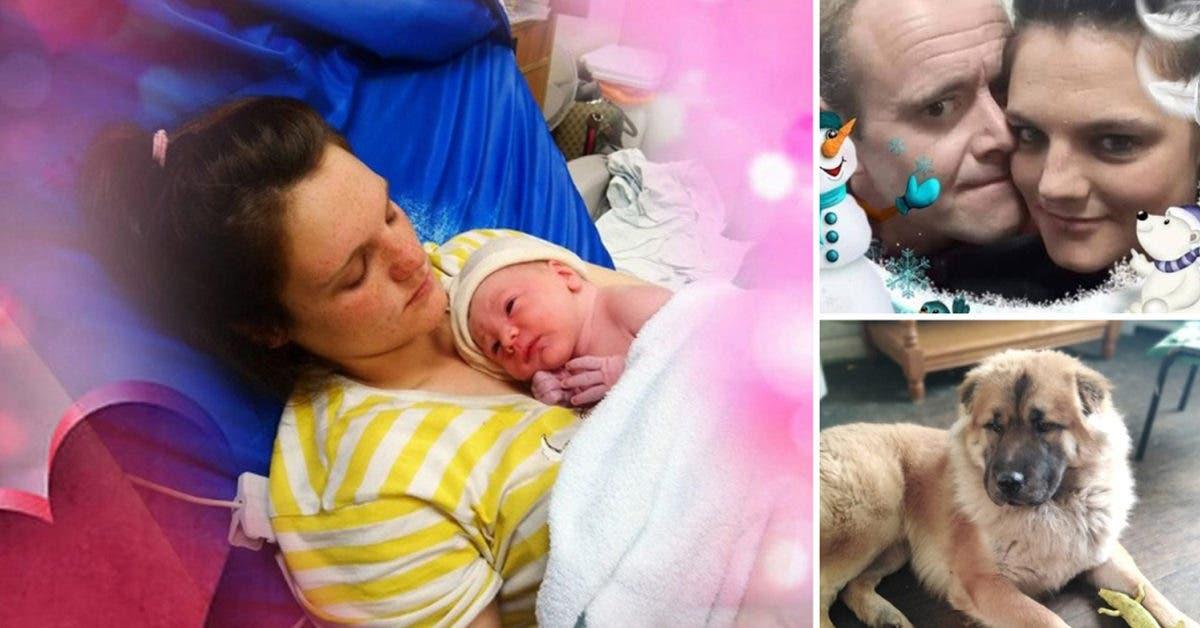 « Adieu petit ange » Un chien « jaloux » mutile à mort un bébé de 12 jours
