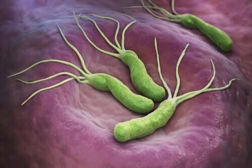 Helicobacter pylori et le cancer : sont-ils liés ? – Améliore ta Santé