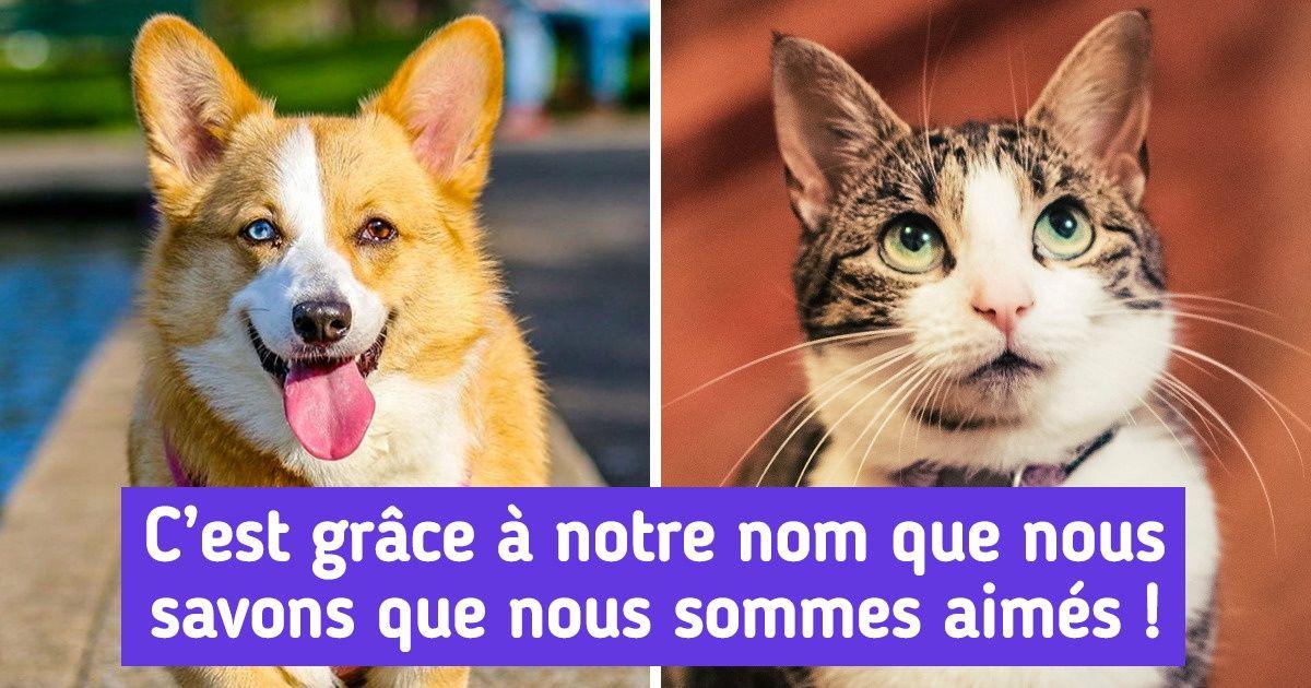 """30 Noms pour des chiens ou chats qui signifient """"amour"""""""