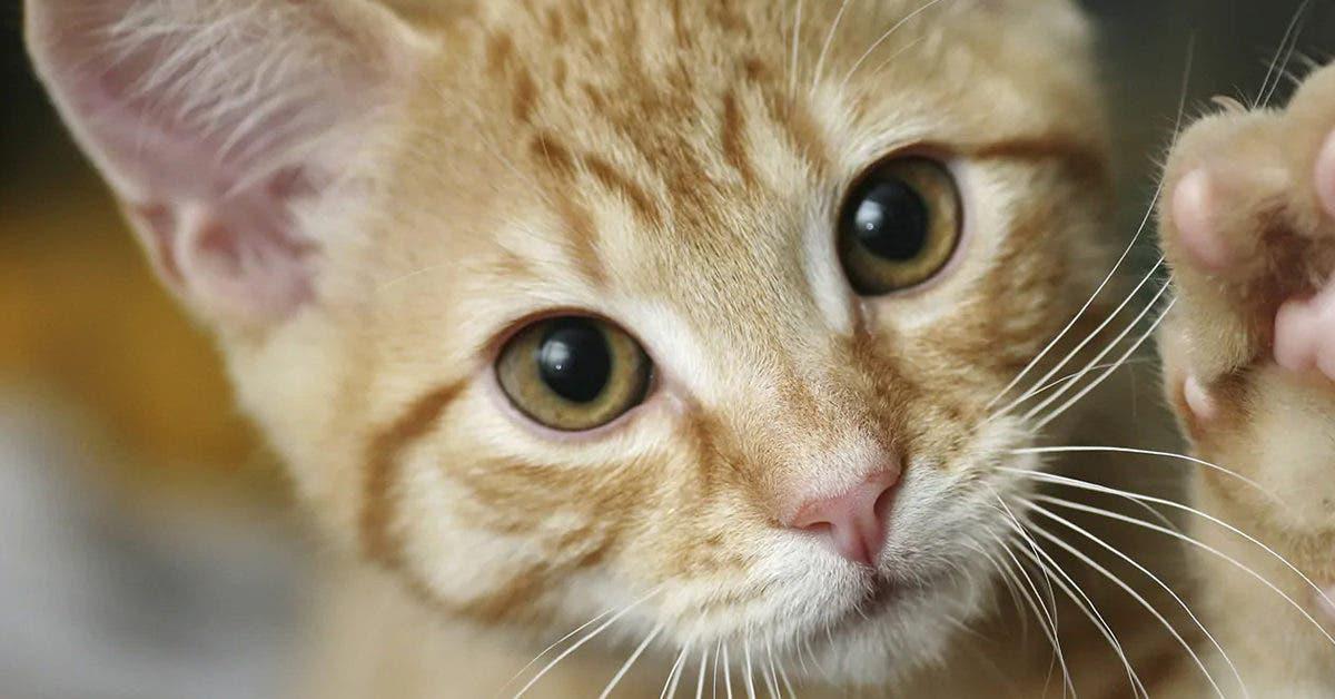 Oui, les chats roux sont extraordinaires
