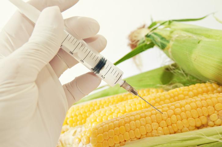 Alimentation : combien d'OGM sont-ils autorisés en France ?