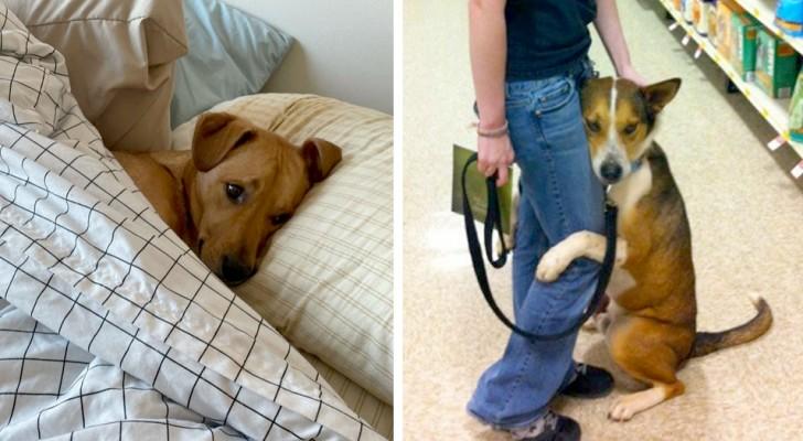 Anges à quatre pattes : 15 chiens qui ont gagné le titre de meilleur ami de l'homme