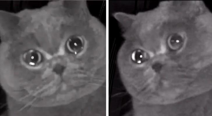 Elle laisse son chat seul à la maison puis le voit 'pleurer' à travers la caméra de surveillance