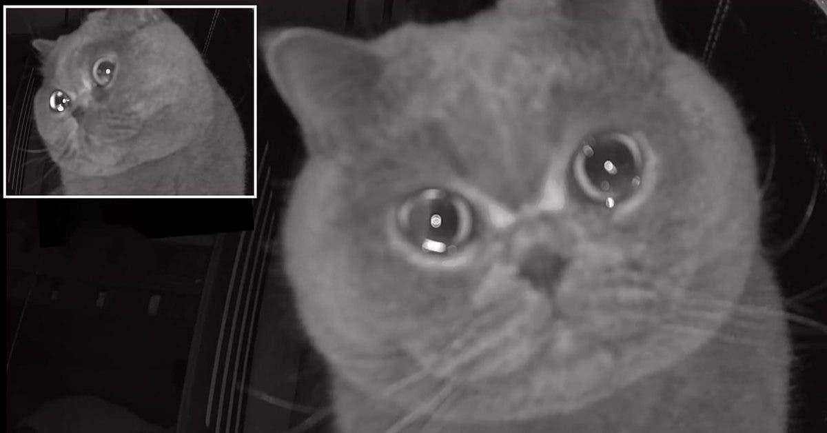 Après avoir été laissé seul, ce chat qui semble « pleurer » émeut les internautes (Vidéo)