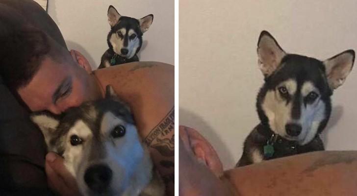 16 photos drôles de regards énervés nous montrent à quel point les animaux peuvent être jaloux