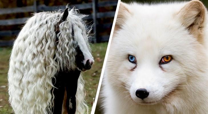Quand la réalité dépasse la fiction : 15 animaux que Dame Nature a rendus uniques en leur genre
