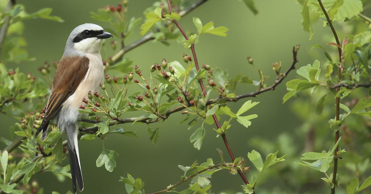10 façons de créer un jardin accueillant pour les oiseaux