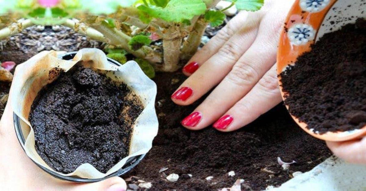 Le marc de café est un engrais naturel : voici comment l'utiliser pour faire pousser vos plantes plus rapidement