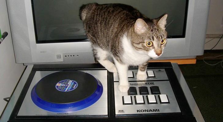 Un chat laissé seul à la maison met involontairement de la musique à fond : les voisins le signalent