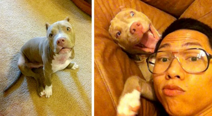 Un garçon retrouve son chien kidnappé en parcourant plus de 1000 kilomètres pour le sauver