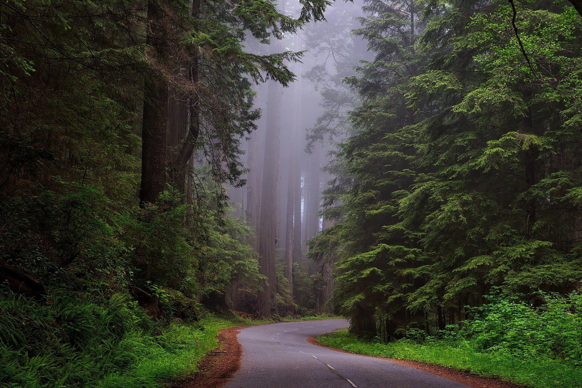 En Californie, on protège les séquoias des incendies avec des feuilles d'aluminium