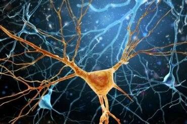 Les neurones de von Economo