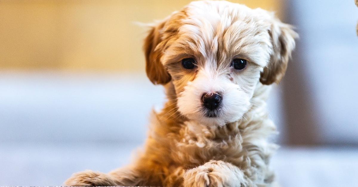 La science nous donne 10 raisons pour adopter un chien
